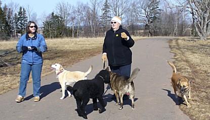 kathy-dogs.jpg