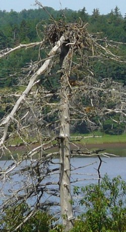 eagles-nest-cropped.jpg