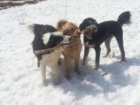 Upton Dogs